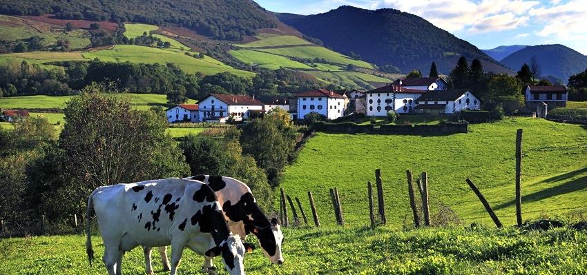 slider JAUREGIA-con-vacas-1